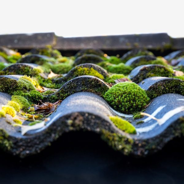 Roof inspection experts - What should you do about moss on your roof?