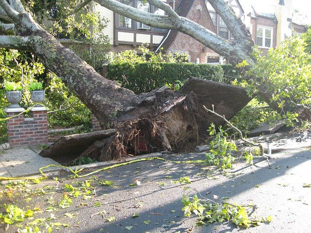 Fallen tree damaged roof? Get urgent roof repairs now - what to do next